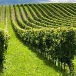 مجلات علمی پژوهشی رشته مهندسی کشاورزی گرایش اکولوژی